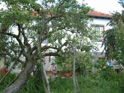 Properties in Bulgaria Borisovo