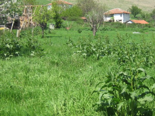 Bulgarian Investment Property Chernozem
