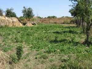 land in Golymo Sharkovo in Bulgaria