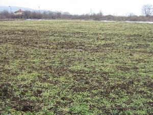 land in General Toshevo in Bulgaria